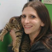 spay/neuter veterinarian
